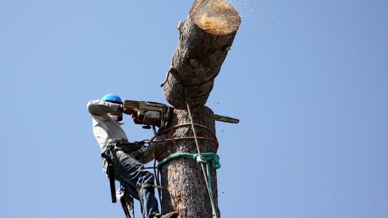 tree removel don't diy services