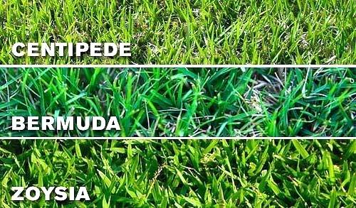 The Top 6 Types Of Grass For Your Lawn Homes Com
