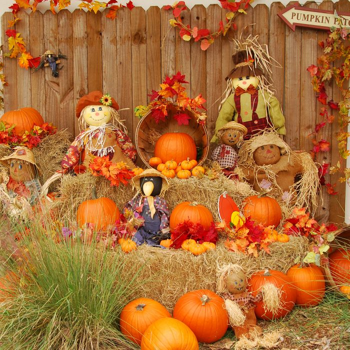 Rustic Pumpkin patch scene with scarecrows and pumpkins on hay bales.