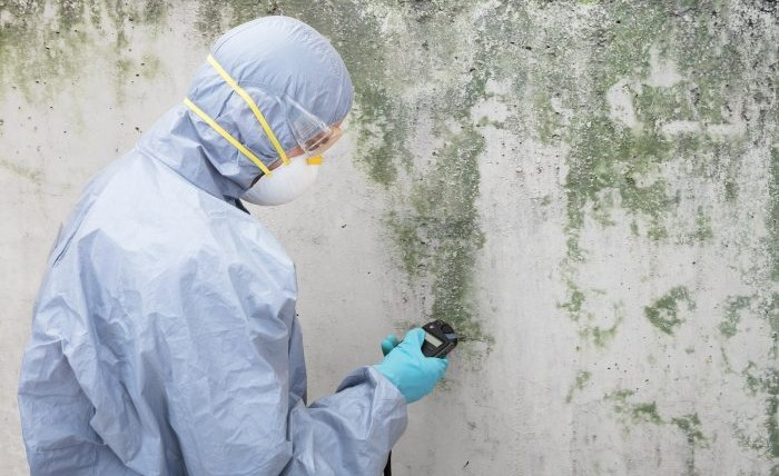 Mold Detection