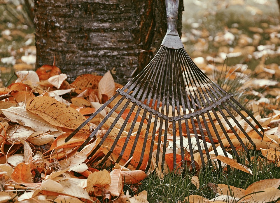 raking leaves into a pile