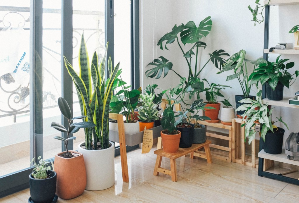 house plants home renovation on a budget